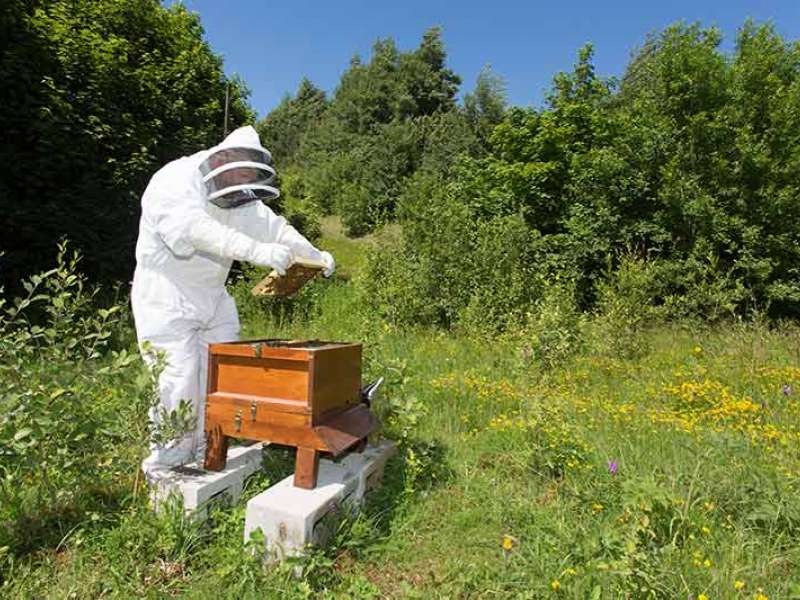 Bee hive at Hope Works